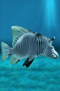 zebra-fish