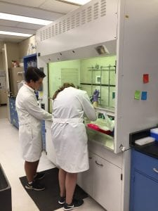 Lisa demonstrating the very delicate technique needed to extract RNA from their wild shark muscle samples.